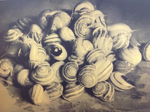 "Hannah Collins. ""A cluster of snails"""