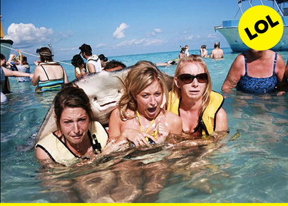 that's an A+ photobomb, sting ray